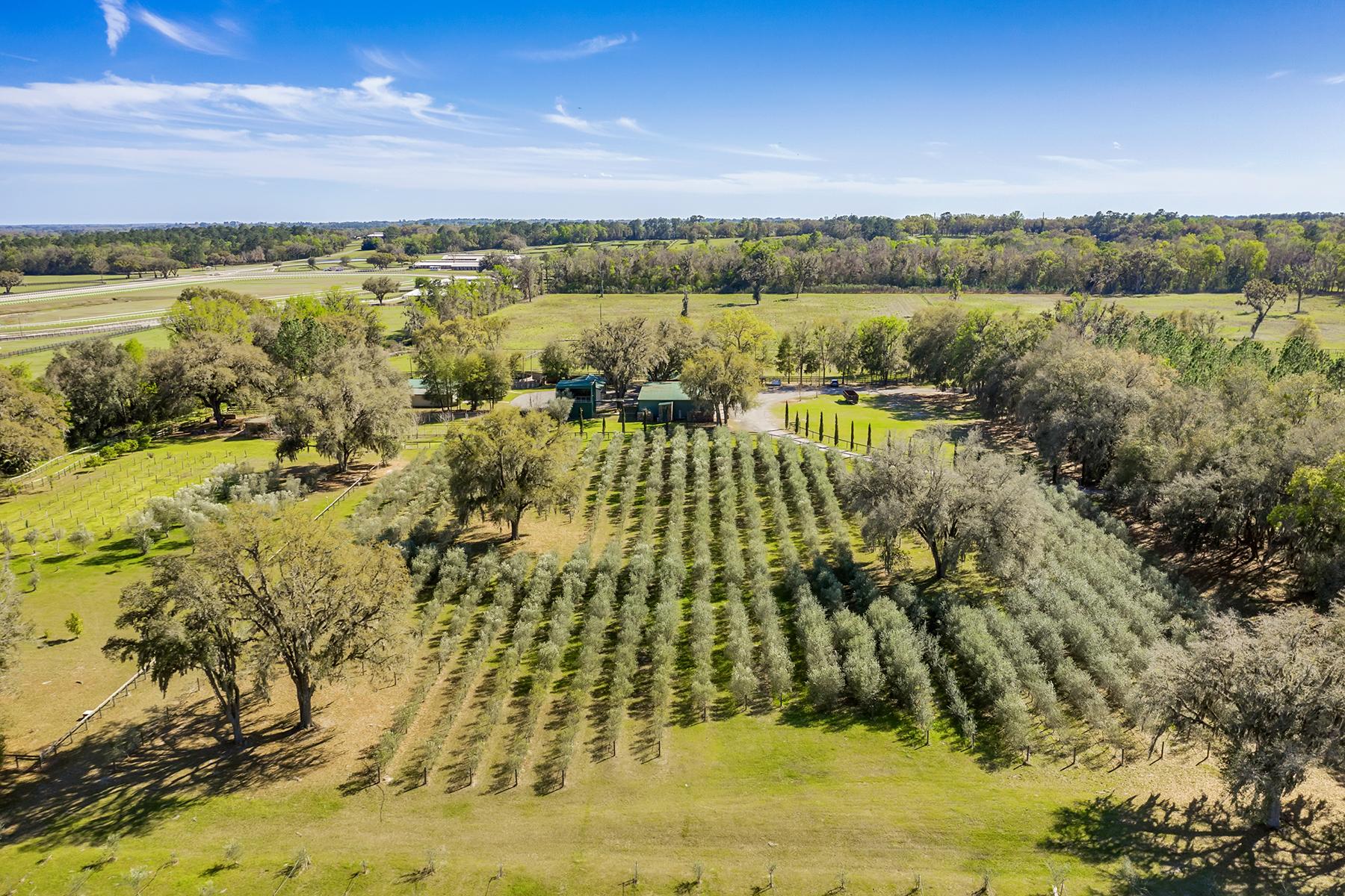 Land für Verkauf beim OCALA 9501 W Highway 326, Ocala, Florida 34482 Vereinigte Staaten
