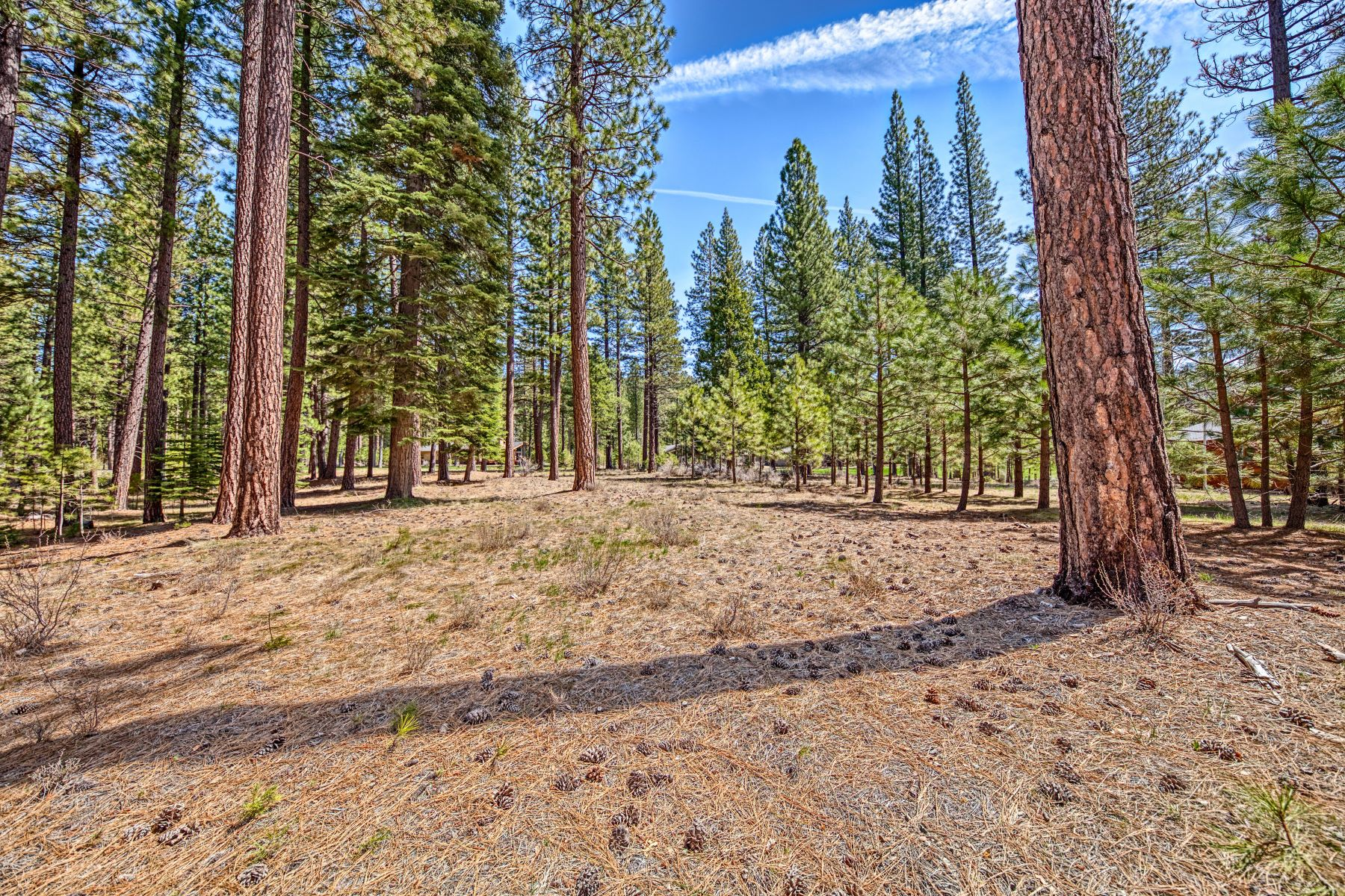 Land for Active at 148 Black Bear Trail, Clio, CA 96106 148 Black Bear Trail Clio, California 96106 United States