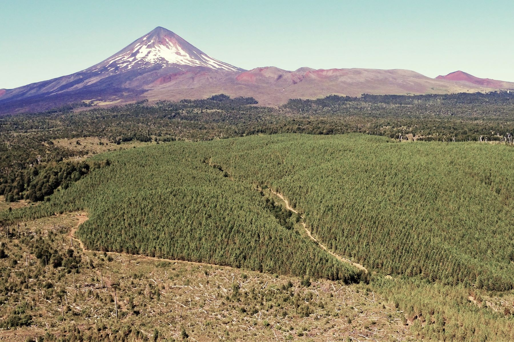 Farm and Ranch Properties for Sale at Fundo Araucarias - Forestry And Tourism Potential - Temuco / Chillán Temuco, La Araucania Chile