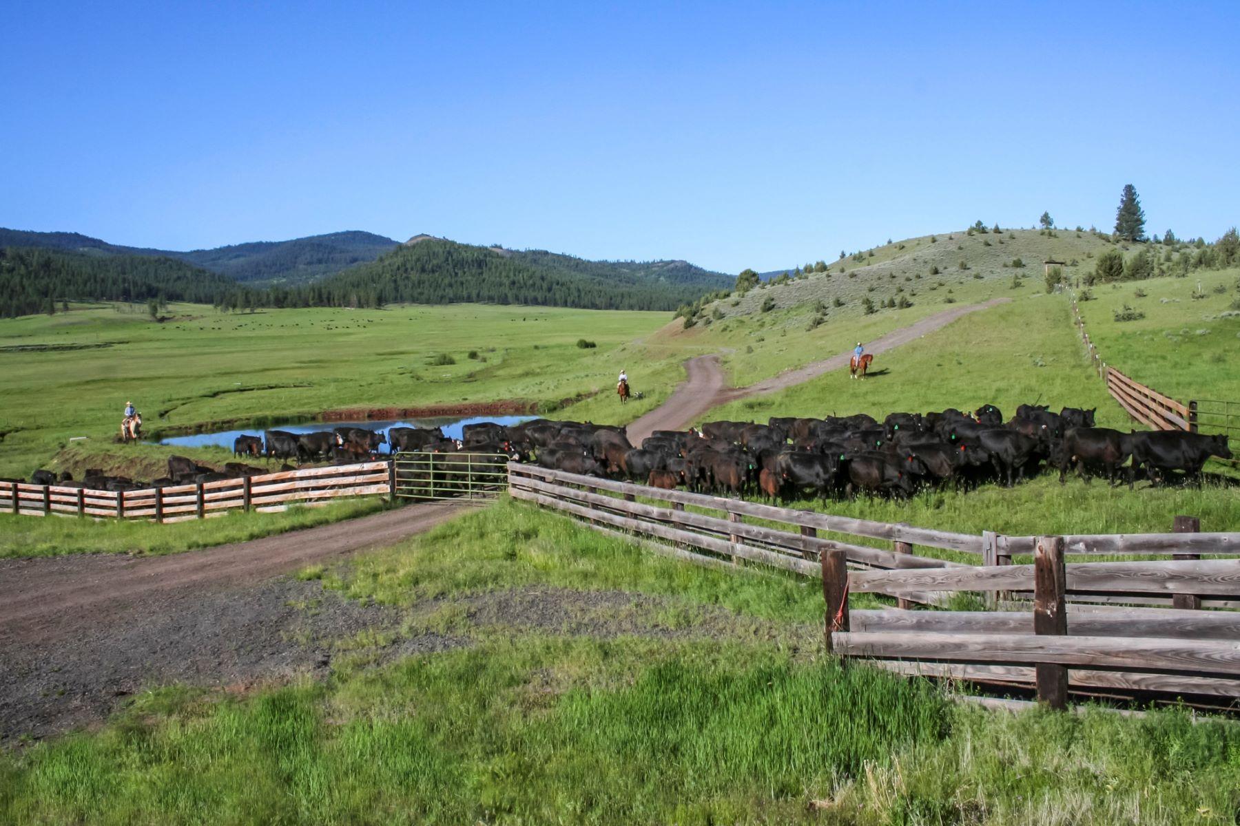 Farm and Ranch Properties für Verkauf beim 21762 Badger Creek Road Mitchell, OR 97750 Mitchell, Oregon 97750 Vereinigte Staaten